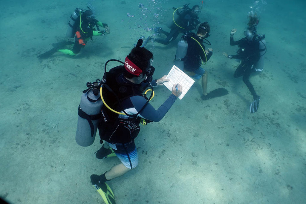 idckohtao.com-open-water-presentations-underwater