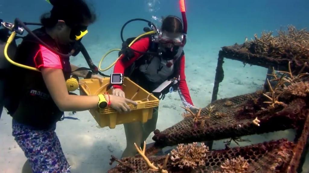 crystaldive.com koh tao thailand divemaster courses marine conservation