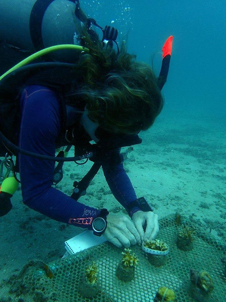 crystaldive.com marine conservation koh tao coral nurseries