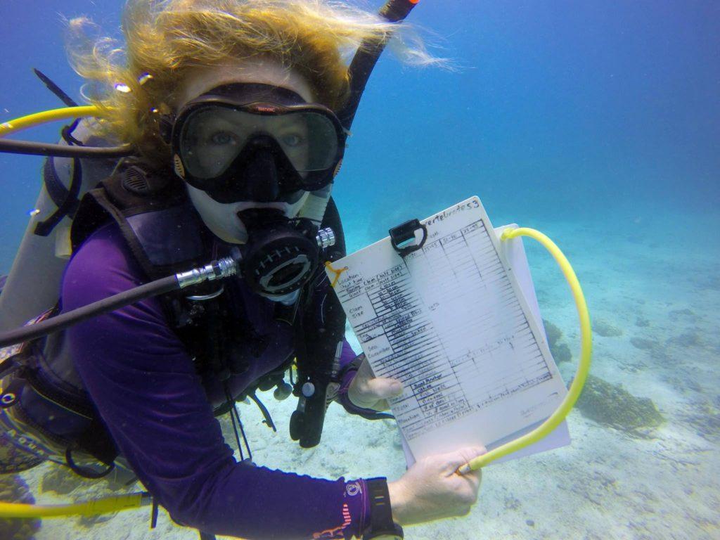 crystaldive.com marine conservation koh tao eco courses