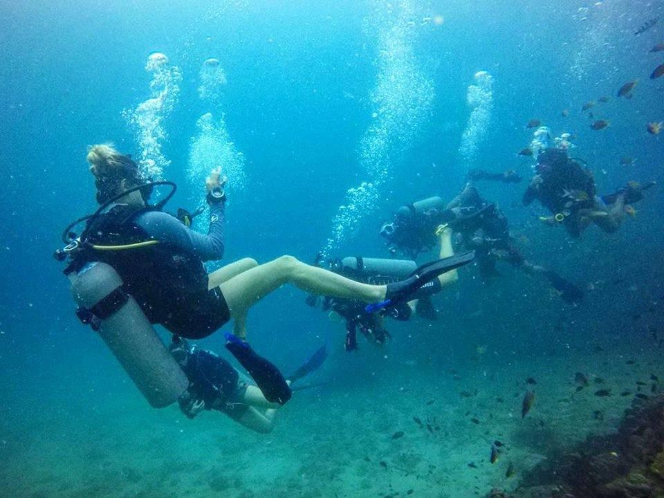 crystaldive.com new padi diving instructor