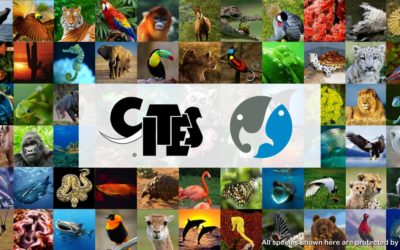 What is CITES and why it is important