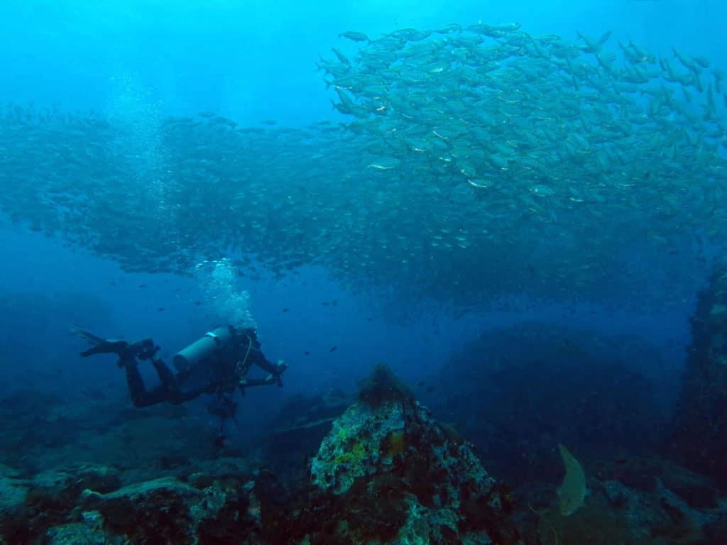 idckohtao.com-padi-digital-underwater-photography-instructor-specialty-koh-tao
