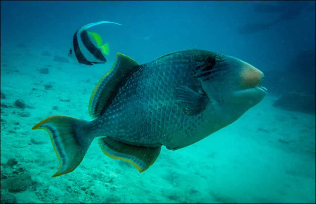 idckohtao.com-padi-fish-id-instructor-specialties