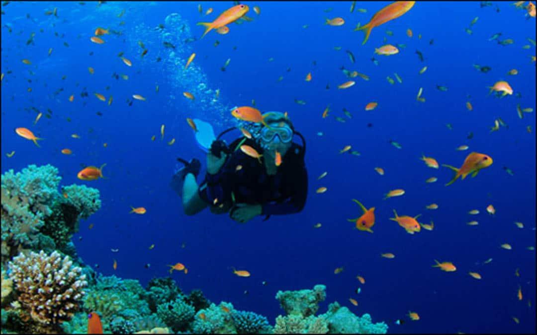 idckohtao.com-padi-fish-id-instructor-specialty
