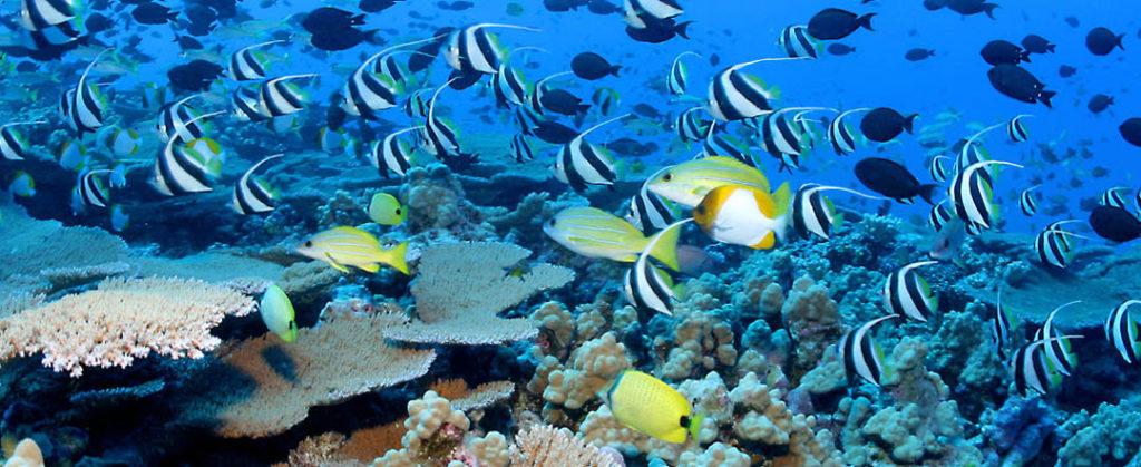 idckohtao.com-padi-fish-id-instructor-specialty-koh-tao
