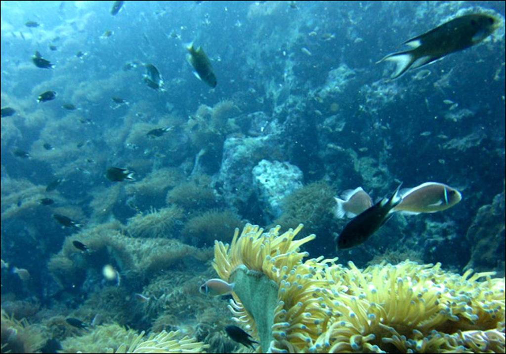 idckohtao.com-padi-fish-id-instructor-specialty-kohtao