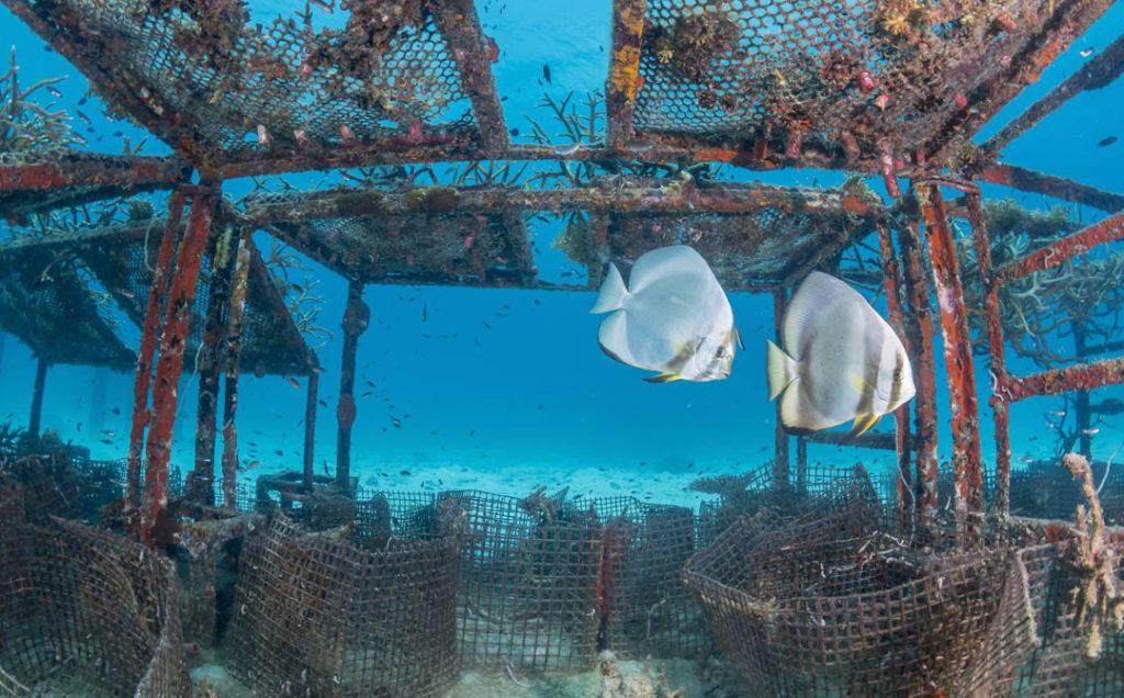 idckohtao.com-padi-fish-id-instructor-specialty-kohtao-island