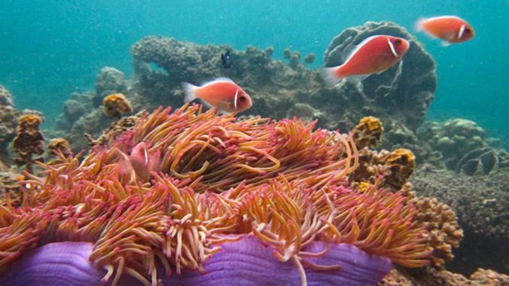 idckohtao.com-padi-fish-id-instructor-specialty-kohtao-islands