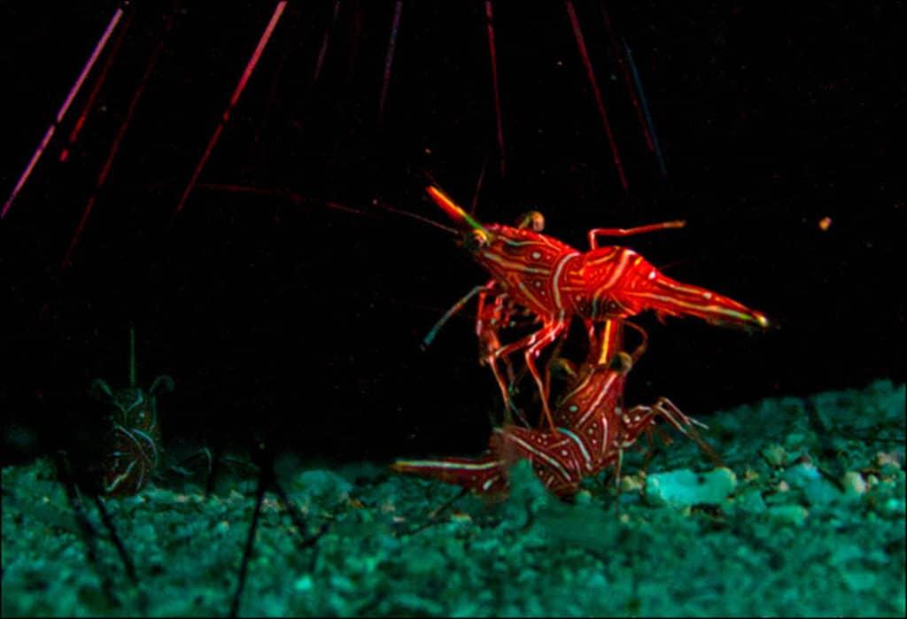 idckohtao.com-padi-underwater-naturalist-instructor-specialty-koh-tao