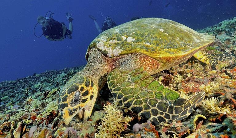 idckohtao.com-padi-underwater-naturalist-instructor-specialty-koh-tao-island-ecokohtao-turtle