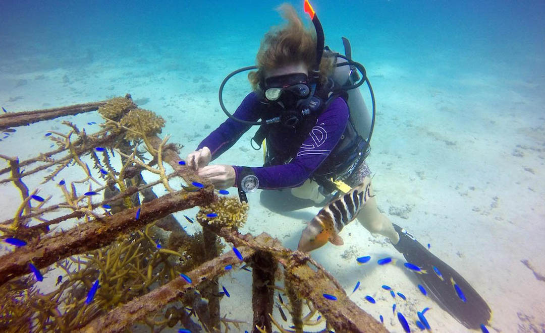 idckohtao.com-padi-underwater-naturalist-instructor-specialty-koh-tao-island-ecokohtao