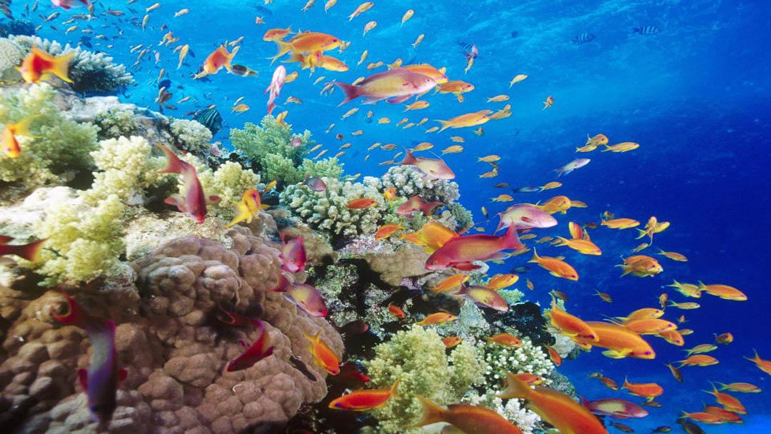 idckohtao.com-padi-underwater-naturalist-instructor-specialty-koh-tao-island