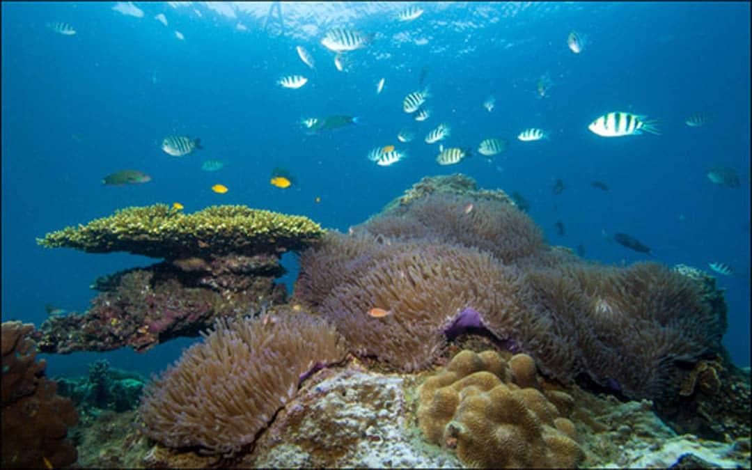 idckohtao.com-padi-underwater-naturalist-instructor-specialty-kohtao