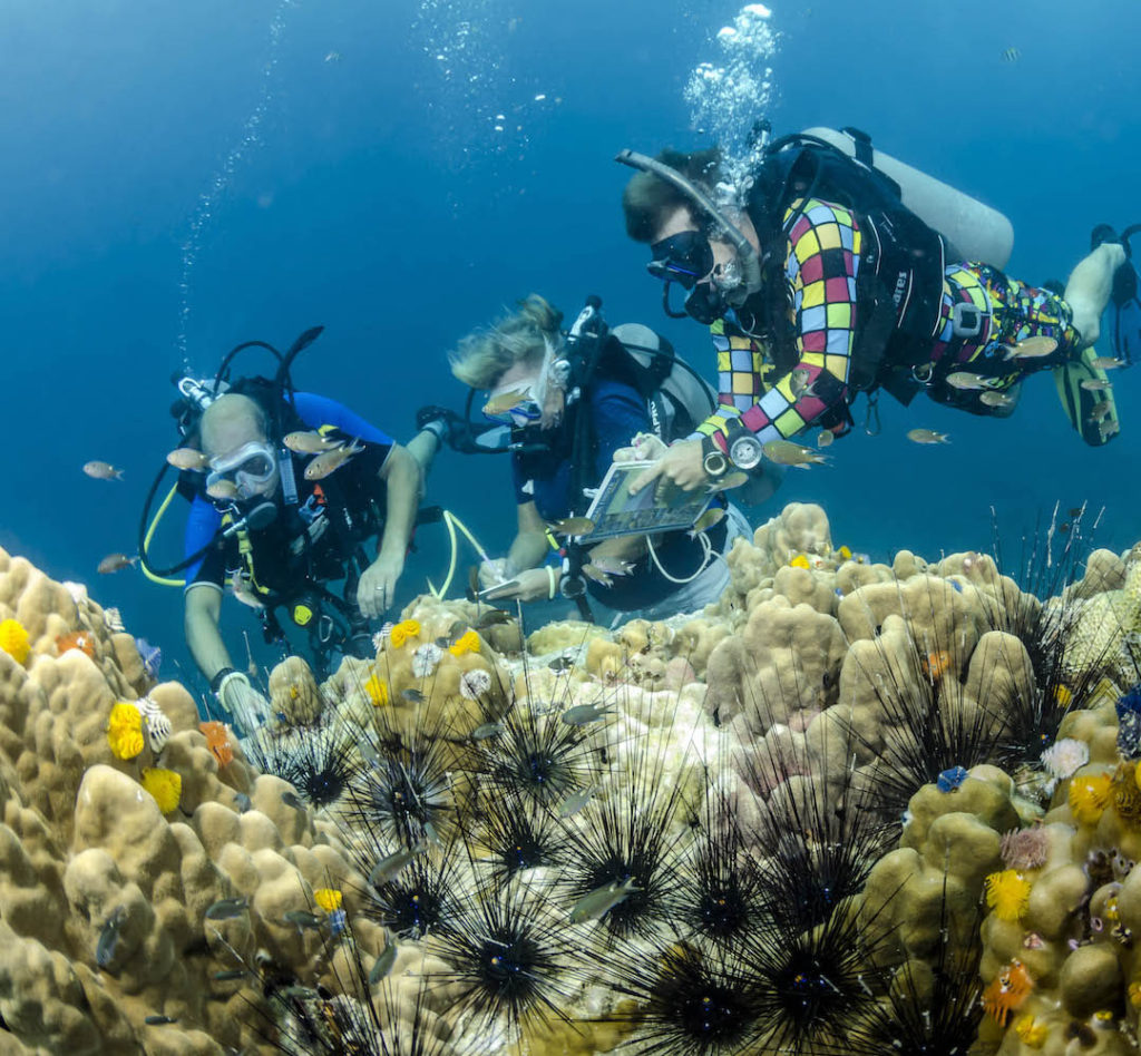 idckohtao.com-padi-underwater-naturalist-specialty-instructor-courses