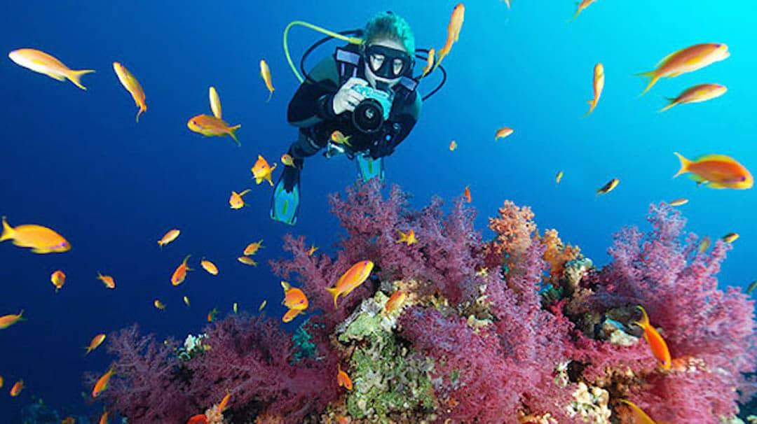 idckohtao.com-padi-underwater-naturalist-instructor-specialty-kohtao-island