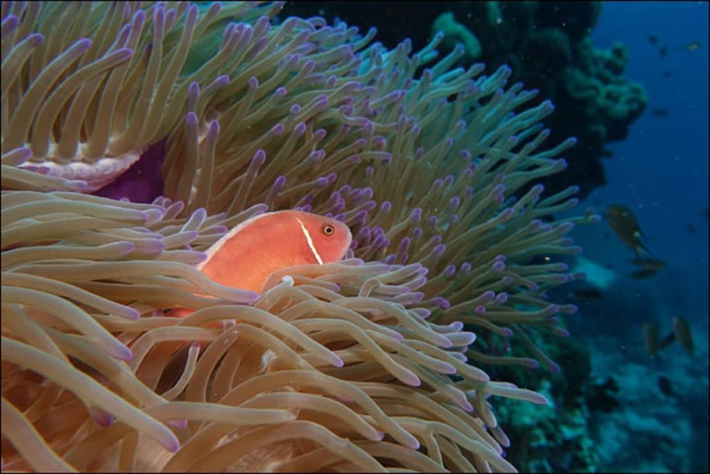 idckohtao.com-padi-underwater-naturalist-instructor-specialty-kohtao-islands