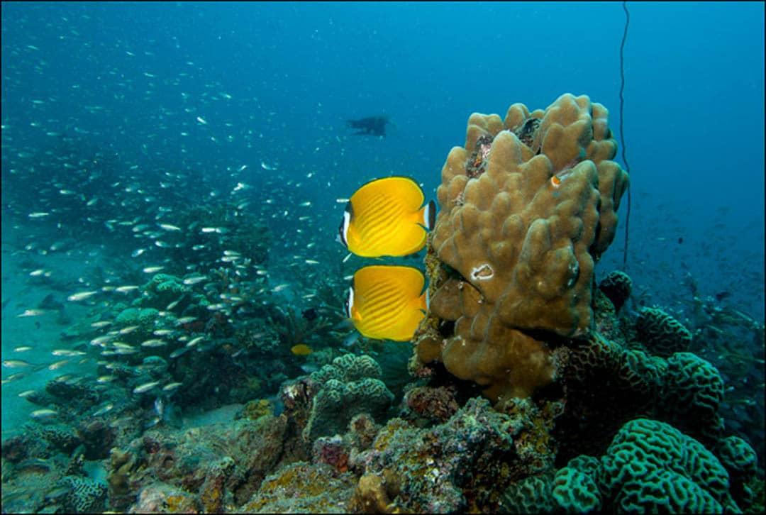idckohtao.com-padi-underwater-naturalist-instructor-specialty
